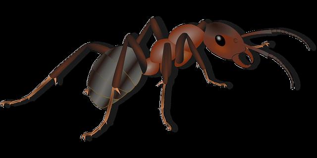 exosquelette fourmi