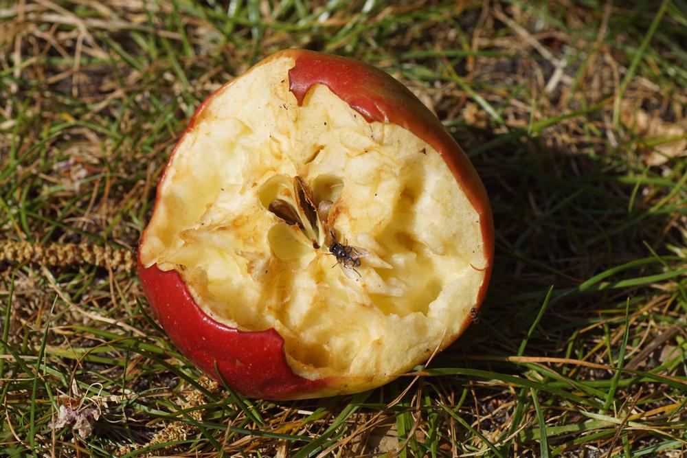 Pomme évidée