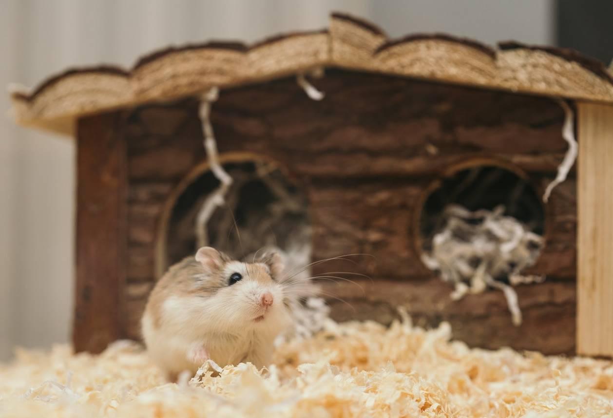 Une souris qui se déplace