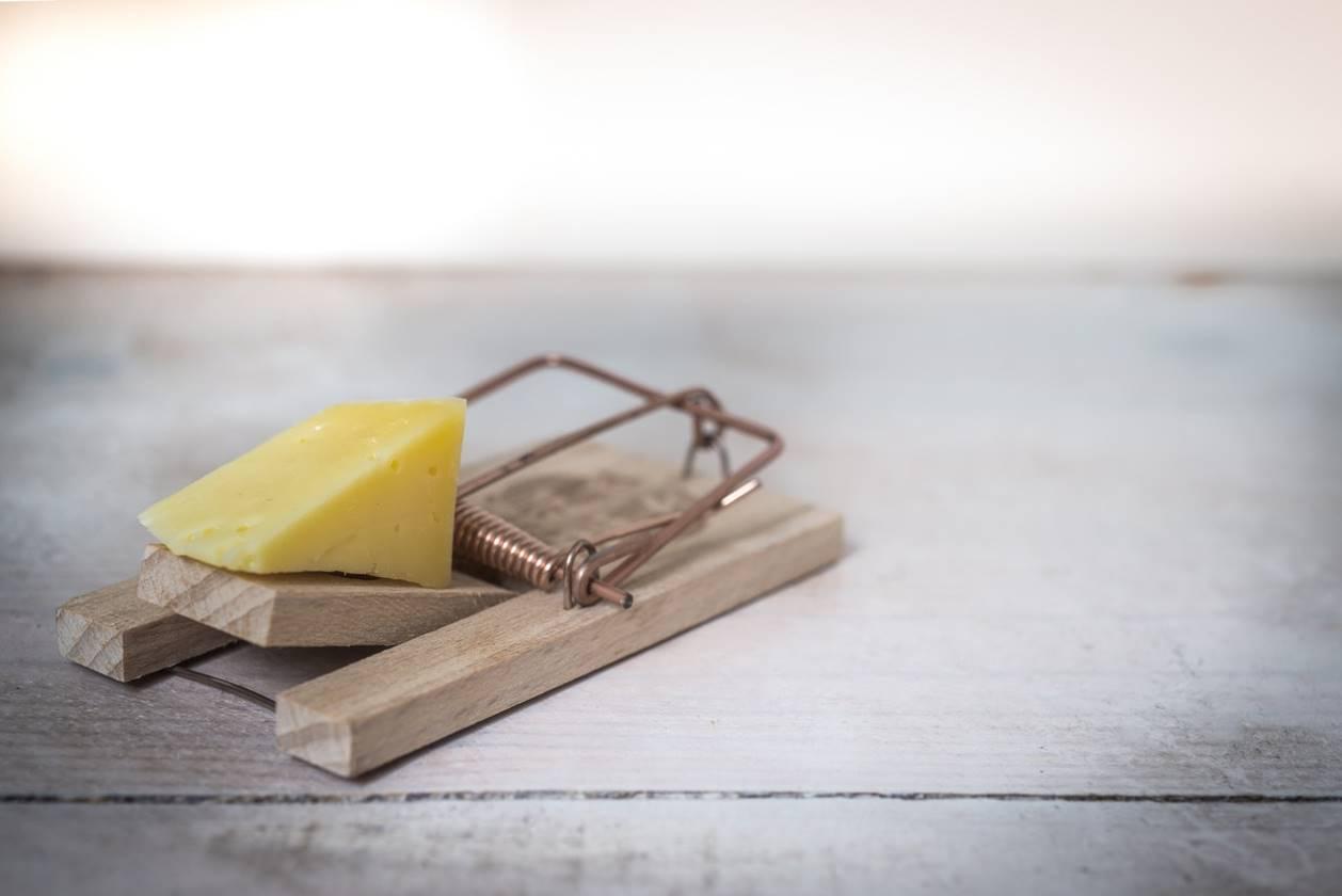 Une tapette à souris avec du fromage