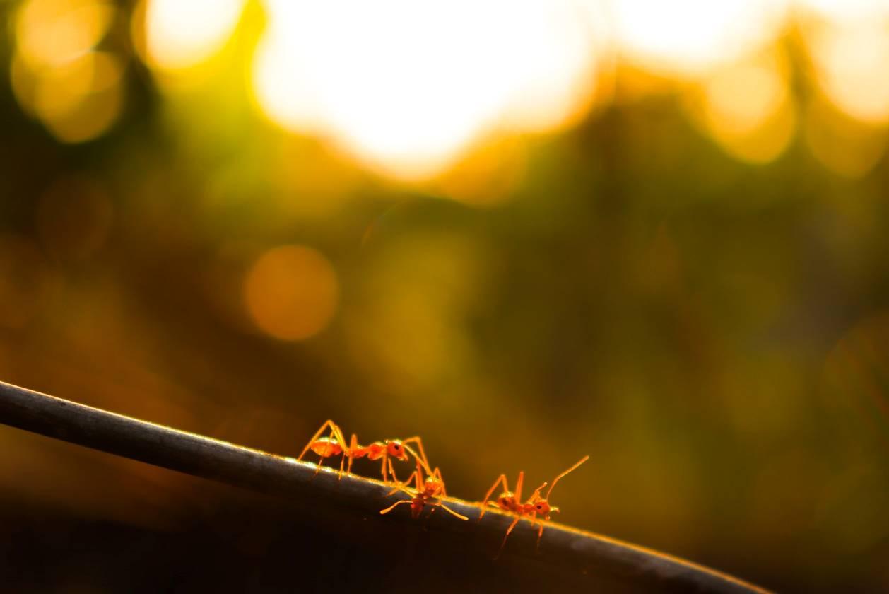 Des fourmis sur un câble
